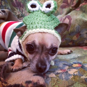 Cosmo the frog